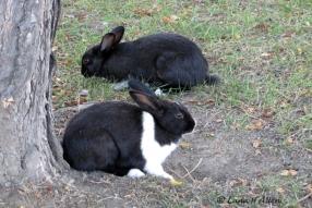 Bunnies1343s