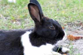 Bunny1312s