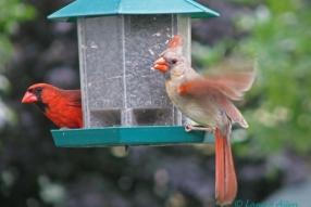 Cardinals2422s