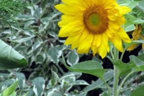 Flower1433s