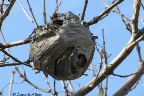 Nest2900s