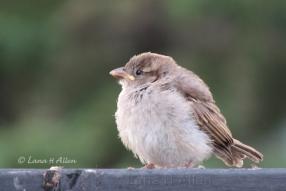 Sparrow7474s