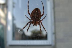Spider0471s