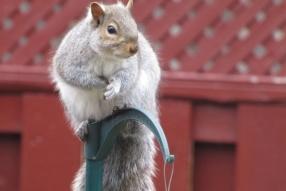 Squirrel3285s