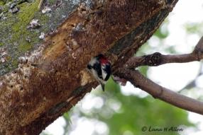 Woodpecker2018s
